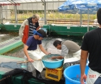 Buying Koi in Japan 2007