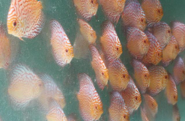 aquatic-heng-brothers