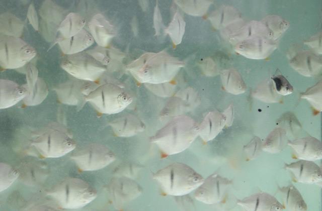 aquatic-kiat-farm