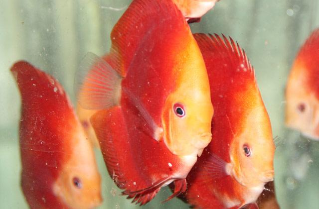 aquatic-lim-thena-alk