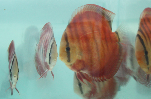 aquatic-tan-joo-sheng