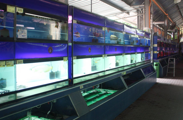 aquatic-xian-leng