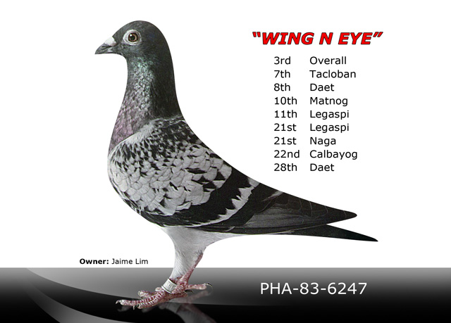 Wing n eye advanced hobbyist genetic breeding station inc for Wing eyecare