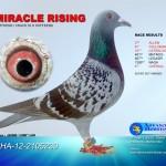 Miracle Rising