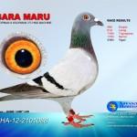 Sara Maru
