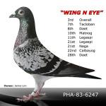 Wing N Eye
