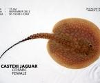 Castexi Jaguar